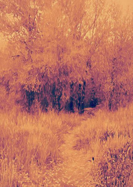 Digital Art - Autumn Mystery by David King