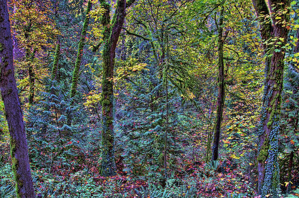 Camera Raw Photograph - Autumn On The Fringes Of Summer by Brenton Cooper
