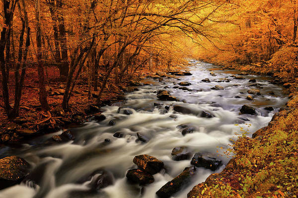 Photograph - Autumn On The Little River by Greg Norrell