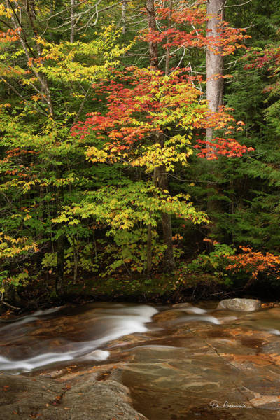 Photograph - Autumn On The Pemigewasset 2380 by Dan Beauvais