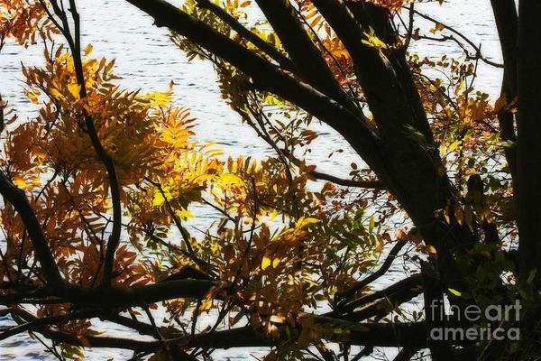 Photograph - Autumn On The Riverside by Tatiana Travelways