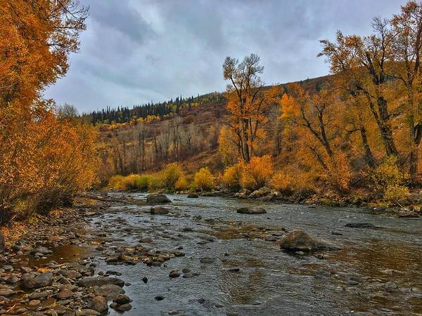 Photograph - Autumn On The Yampa River by Dan Miller