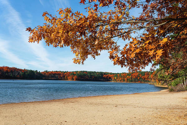 Photograph - Autumn On Walden Pond Concord Ma Fall Leaves by Toby McGuire