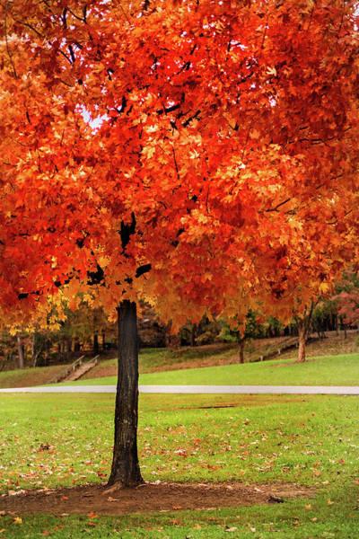 Photograph - Autumn Orange by Don Johnson