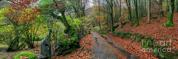 Wall Art - Photograph - Autumn Panorama by Adrian Evans