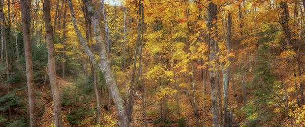 Photograph - Autumn Panorama by Susan Rissi Tregoning