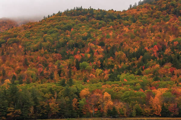 Photograph - Autumn Patches In Crawford Notch by Dan Sproul