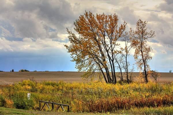Photograph - Autumn Path by David Matthews
