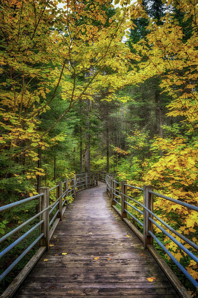 Photograph - Autumn Pathway by Susan Rissi Tregoning