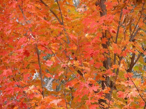 New England Autumn Photograph - Autumn Peak by Imagenhanced