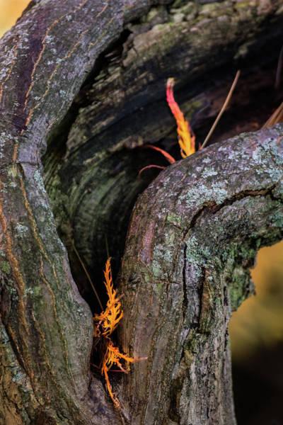 Photograph - Autumn Peek A Boo by Stewart Helberg
