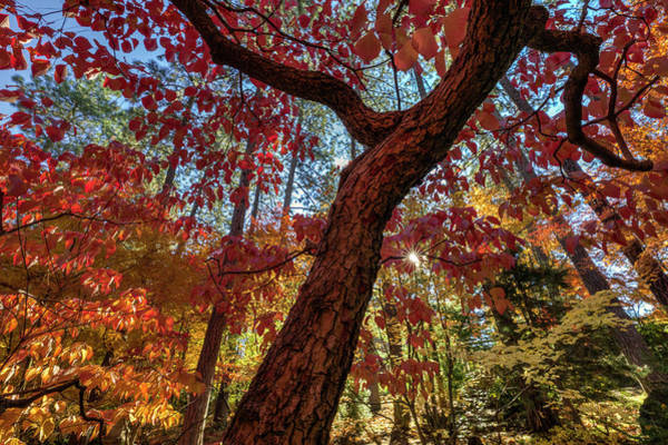 Photograph - Autumn Potpourri - Spokane Japanese Garden by Mark Kiver