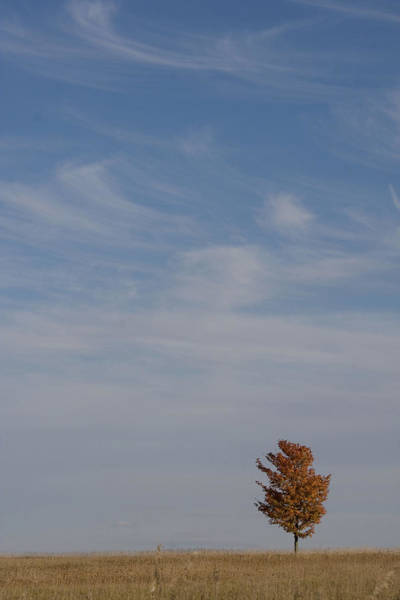 Photograph - Autumn Prairie Sky by Dylan Punke