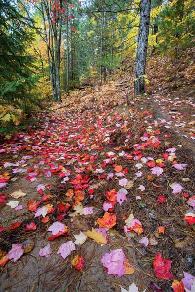 Photograph - Autumn Red Maple Leaves 10121801 by Rick Veldman