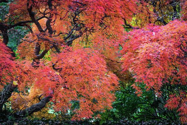Photograph - Autumn Reds by Stewart Helberg