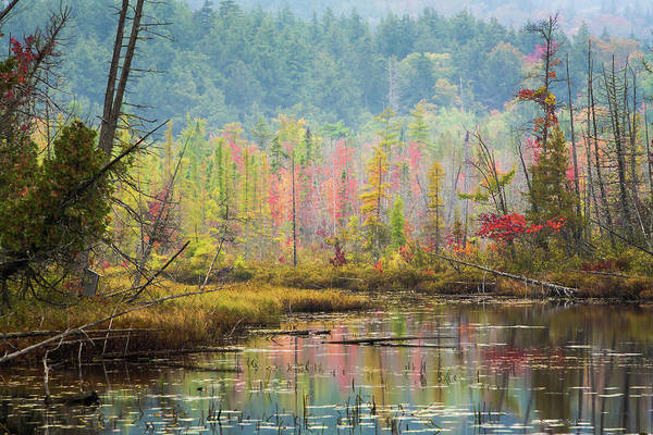 Adirondack Mountains Wall Art - Photograph - Autumn Reflections At  Adirondack by Bob Pool