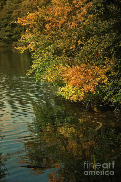 Digital Art - Autumn Reflections by Liz Alderdice
