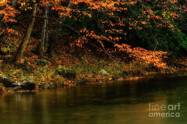 Photograph - Autumn Remnant Back Fork Of Elk River by Thomas R Fletcher
