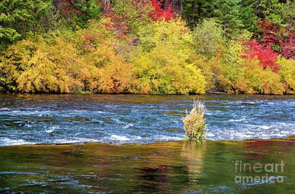 Photograph - Autumn River by David Millenheft