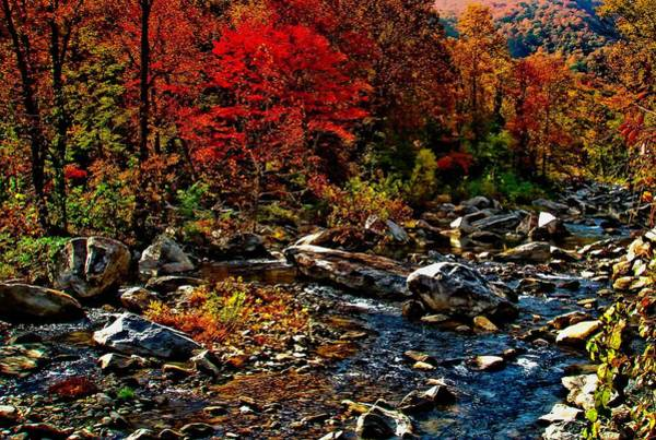 Photograph - Autumn River Dreams by Allen Nice-Webb