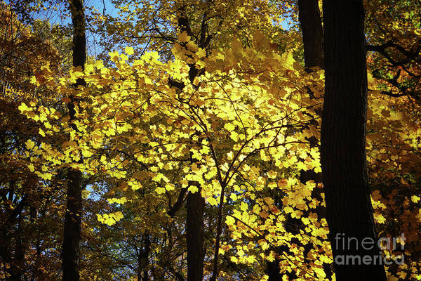 Photograph - Autumn Shades Of Yellow by Rachel Cohen