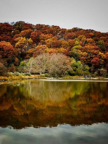 Photograph - Autumn by Shannon Kelly