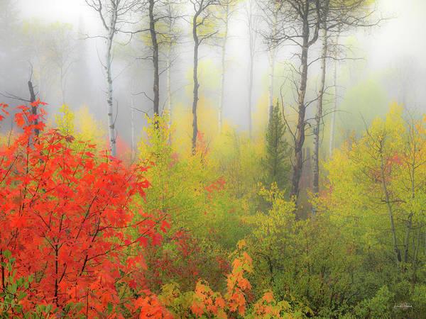 Photograph - Autumn Silence by Leland D Howard