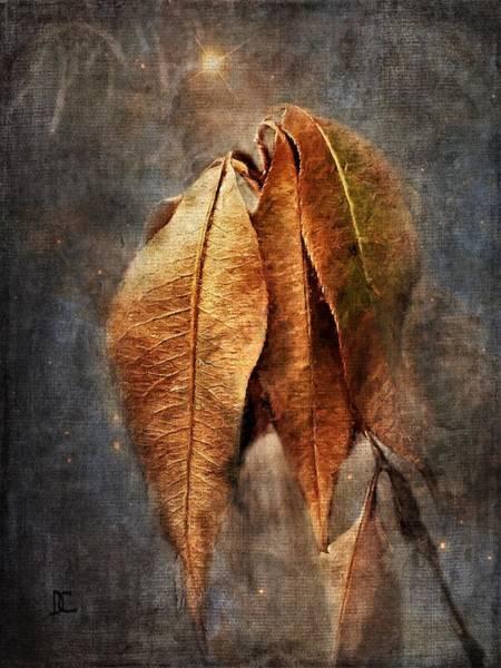 Photograph - Autumn Slumber by Diane Chandler