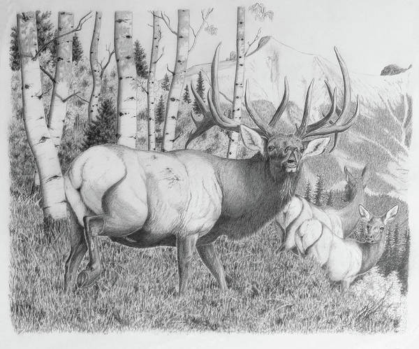 Bugling Drawing - Autumn Song by Darcy Tate