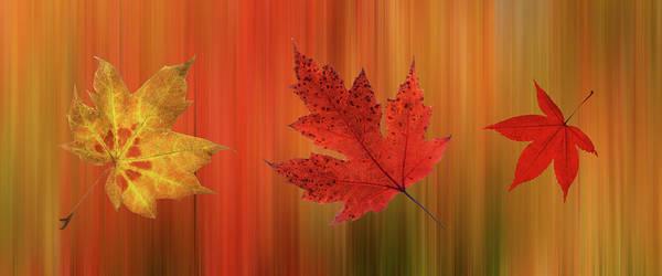 Photograph - Autumn Spirit Panoramic by Gill Billington
