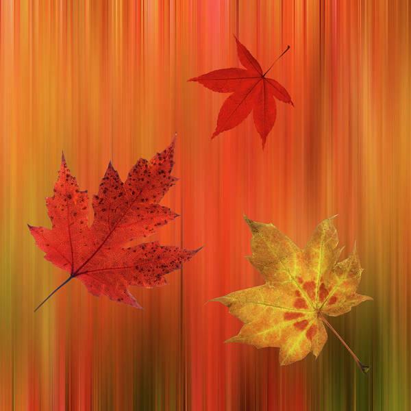 Photograph - Autumn Spirit Square by Gill Billington
