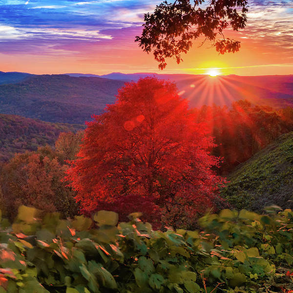 Wall Art - Photograph - Autumn Splendor At Artist Point - Mountainburg Arkansas by Gregory Ballos