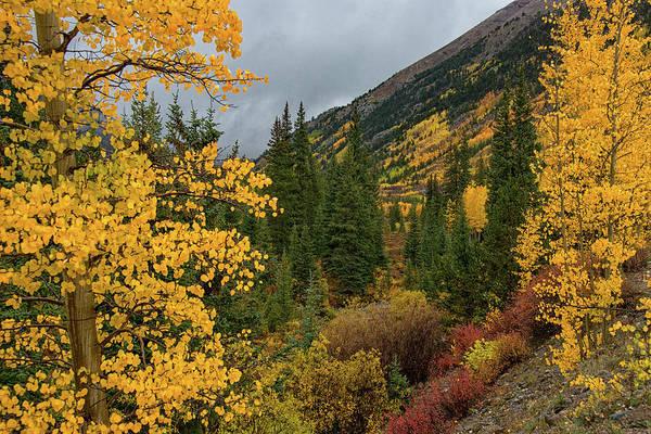 Photograph - Autumn Splendor by Darlene Bushue