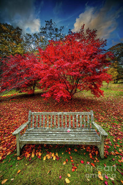 Wall Art - Photograph - Autumn Splendour by Adrian Evans
