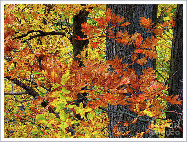 Wall Art - Photograph - Autumn Splendour In Ontario II by Al Bourassa