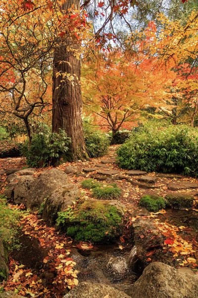 Photograph - Autumn Stream In Lithia Park by James Eddy