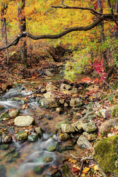 Photograph - Autumn Stream In The Ouachita Mountains by Gregory Ballos