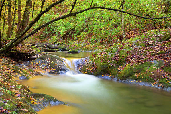 Southern Usa Photograph - Autumn Stream by Kencanning