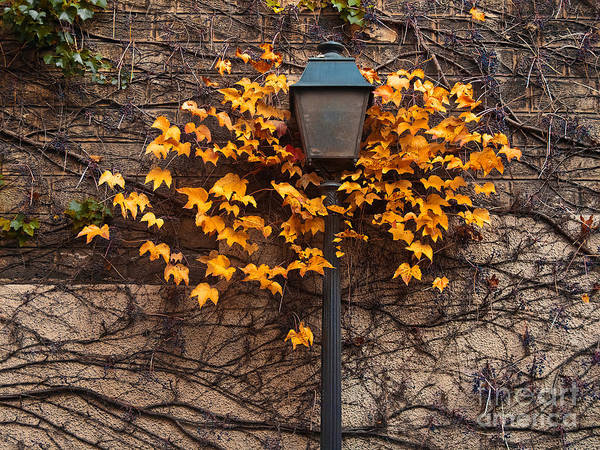 Vibrant Color Wall Art - Photograph - Autumn Street Lamp. Paris. Montmartre by Artens