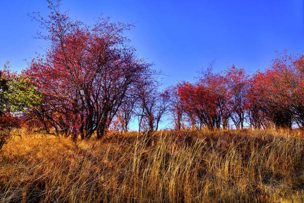 Photograph - Autumn Sun by David Patterson