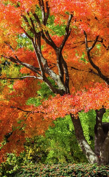 Photograph - Autumn Sun Kissed by Stewart Helberg