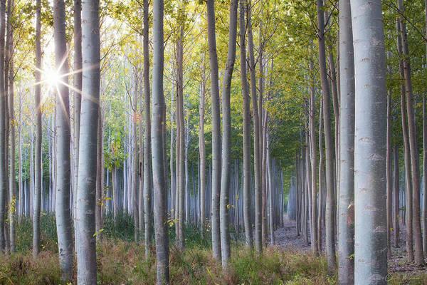 Wall Art - Photograph - Autumn Sunburst by Chris Marinsik