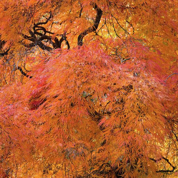 Photograph - Autumn Threads by Stewart Helberg