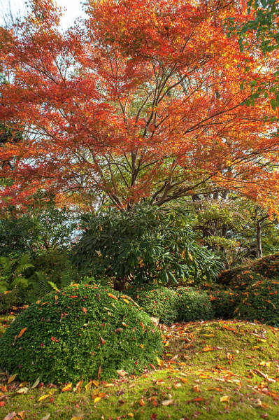 Photograph - Autumn Time In Japanese Garden 1 by Jenny Rainbow