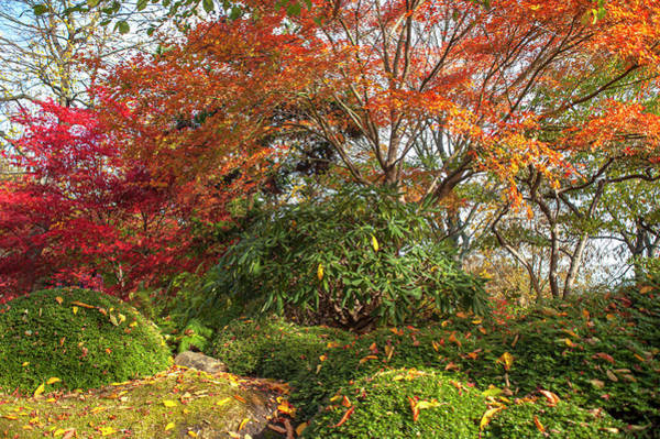 Photograph - Autumn Time In Japanese Garden 2 by Jenny Rainbow