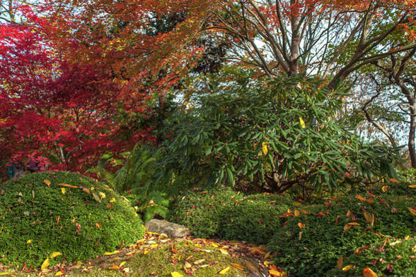 Photograph - Autumn Time In Japanese Garden 4 by Jenny Rainbow