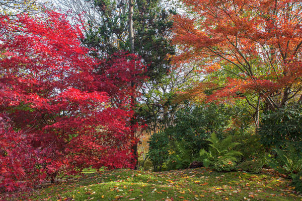 Photograph - Autumn Time In Japanese Garden 5 by Jenny Rainbow