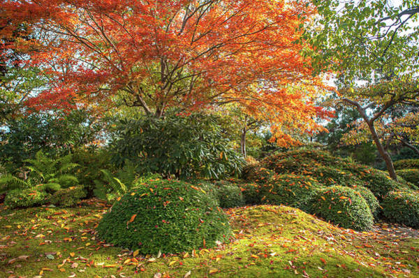 Photograph - Autumn Time In Japanese Garden by Jenny Rainbow