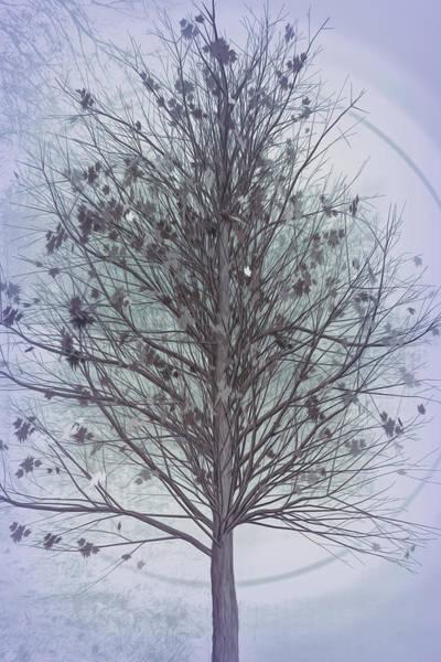 Digital Art - Autumn Tree In Cool Grays by Debra and Dave Vanderlaan