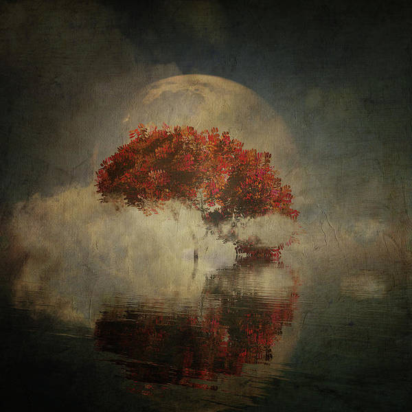 Digital Art - Autumn Tree In The Mist by Jan Keteleer